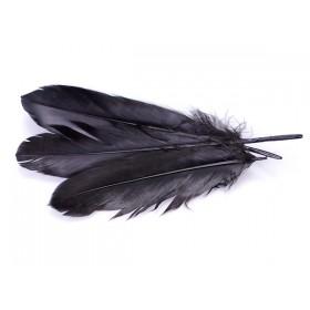 Zdjęcie - Pióra naturalne barwione koloru czarnego
