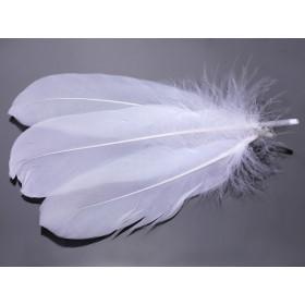 Zdjęcie - Pióra naturalne barwione koloru białego