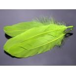 Zdjęcie - Pióra naturalne barwione koloru neonowo zielonego