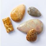 Zdjęcie - Koral skamieniały fossil zawieszka łezka nieregularna
