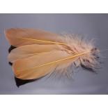 Zdjęcie - Pióra naturalne barwione koloru beżowego